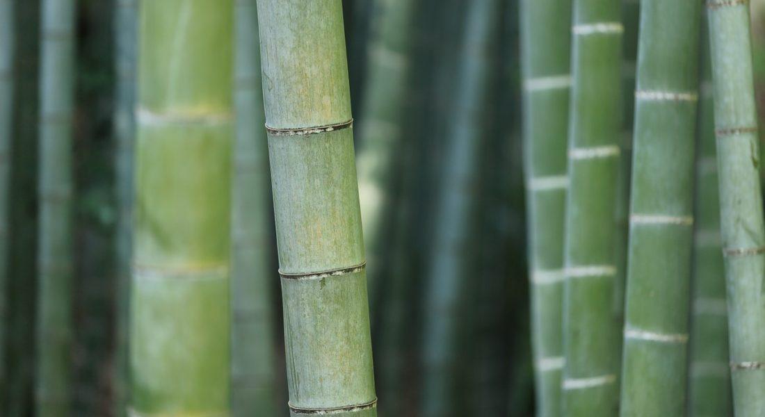 sitenschlaeferkissenbezug-bambus